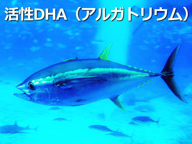 活性DHA(アルガトリウム)